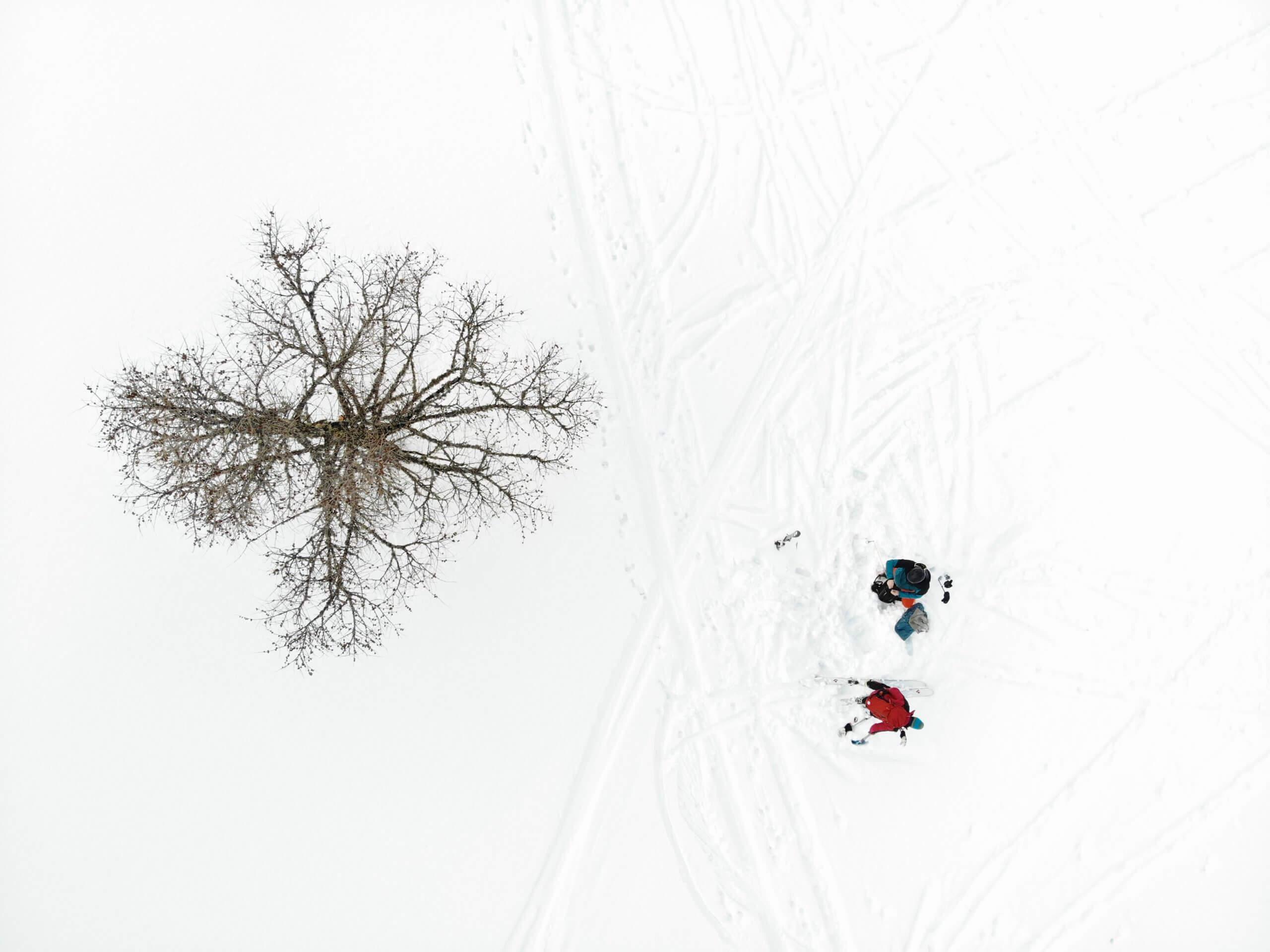 SEO alpinonline, pic by argonautpro